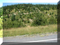 a f0912wa msh_264 road new trees_1.JPG (60486 bytes)